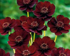 Beautiful and Rarest Flowers