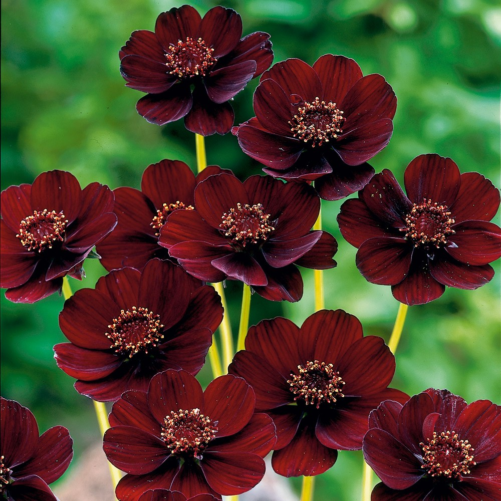 The Top 10 Rarest And Most Beautiful Flowers