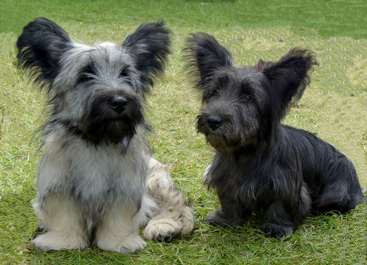 Top Cute Breeds Of Dogs