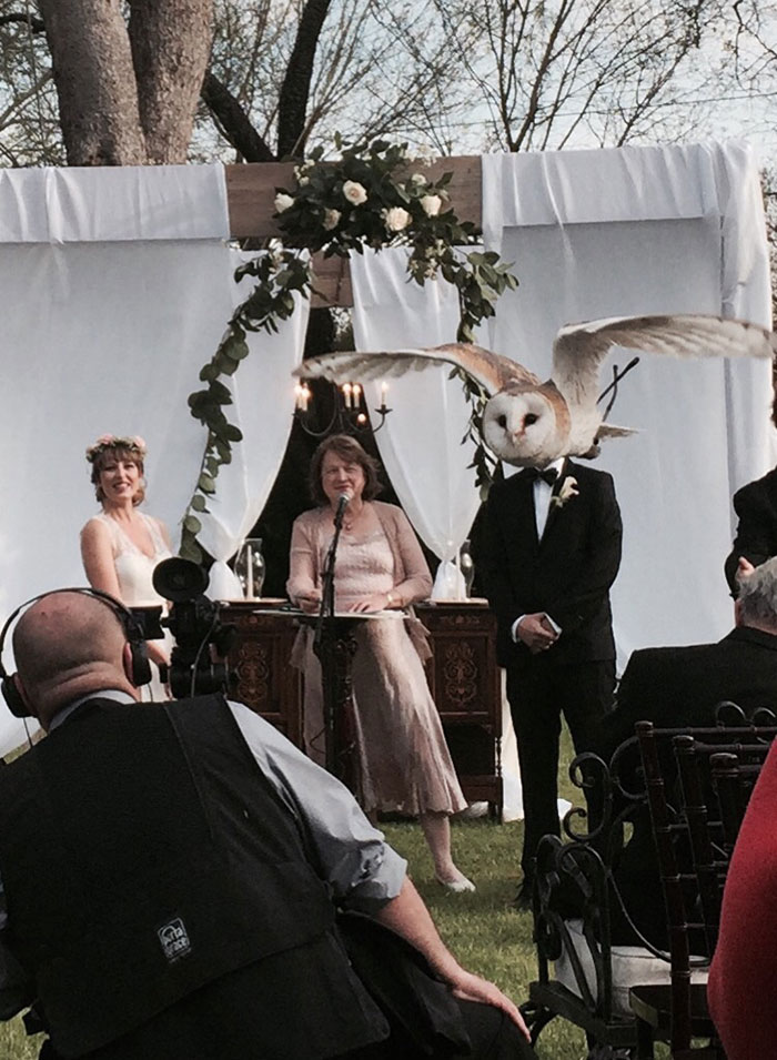 woman marries owl perfectly timed photo