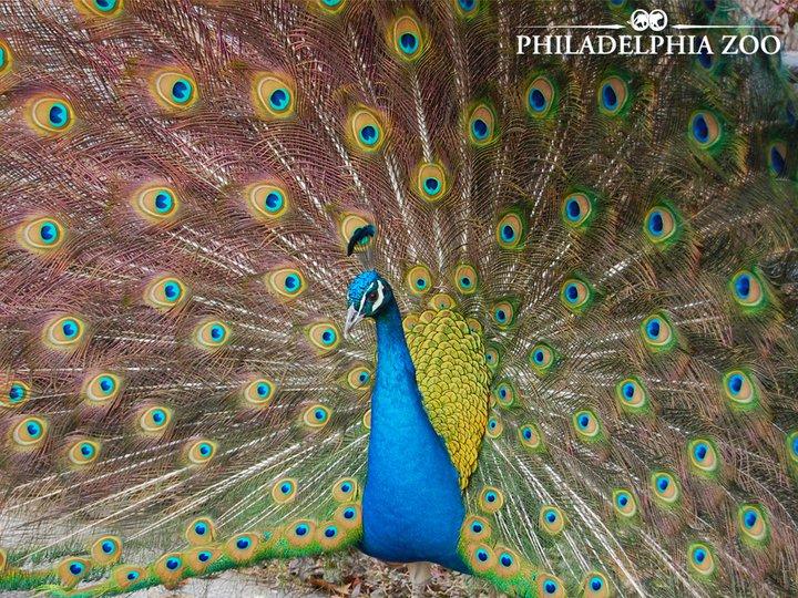 philadelphia zoo picture