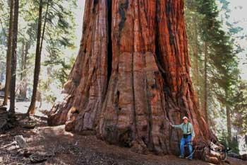 president-tree