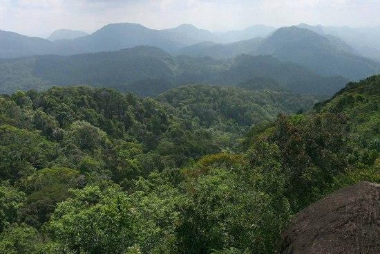 sinharaja-forest-reserve
