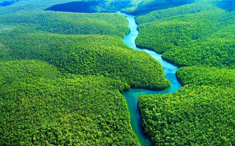 amazon-rainforest-03